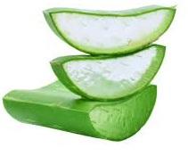 Aloe Vera for Folliculitis