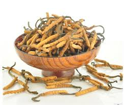 Cordyceps Herb for Emphysema