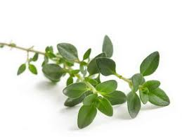 Thyme Herb for Emphysema
