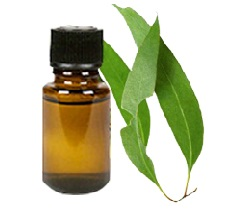 Eucalyptus Oil