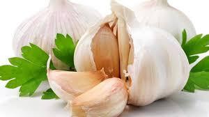 Garlic Fight the Bacteria
